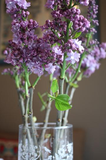 LilacLovelies1