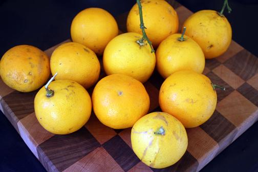 CitrusHarvest3