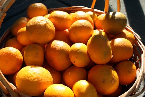 CitrusHarvest10