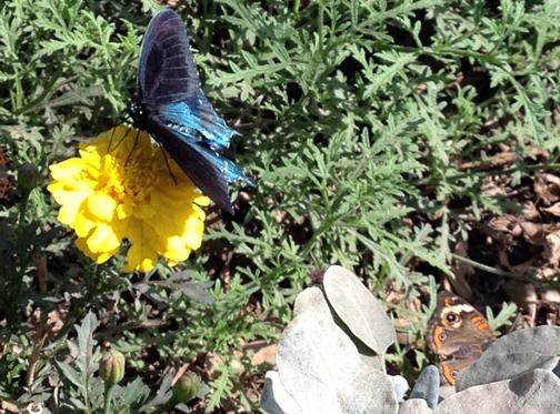 ADayOfButterfliesAndRoses3
