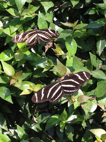 ADayOfButterfliesAndRoses4